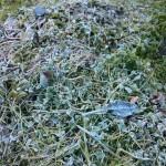 sjælden frost