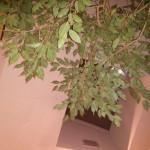 træer inde på persons værelse